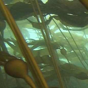 Kelp Bed Monitoring